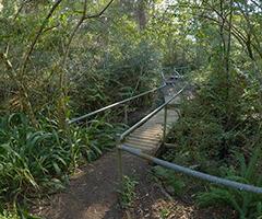 Flaggy Creek Reserve in Charlestown receives $500,000