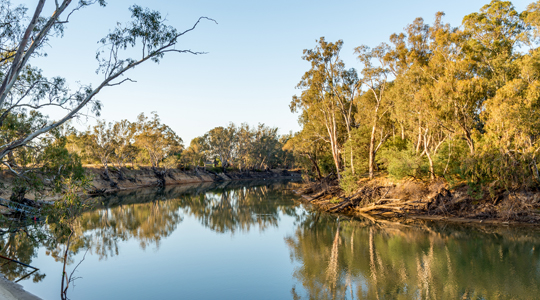 Murray River early morning