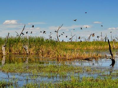 Gwydir watercourse wetland Murray-Darling Basin
