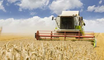 Wheat harvester in a wheat field