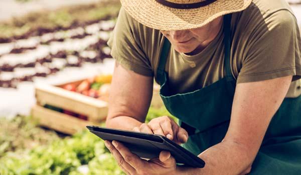Farmer on tablet next to produce