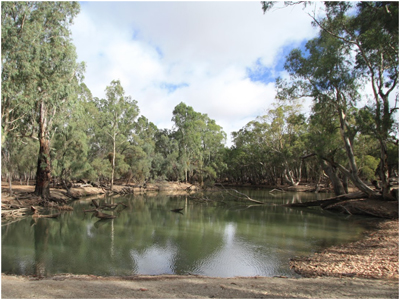 SDLAM in the Lower Murray River
