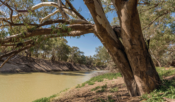 Darling River at The Coach and Horses Campground Wilga Station near Wilcannia.