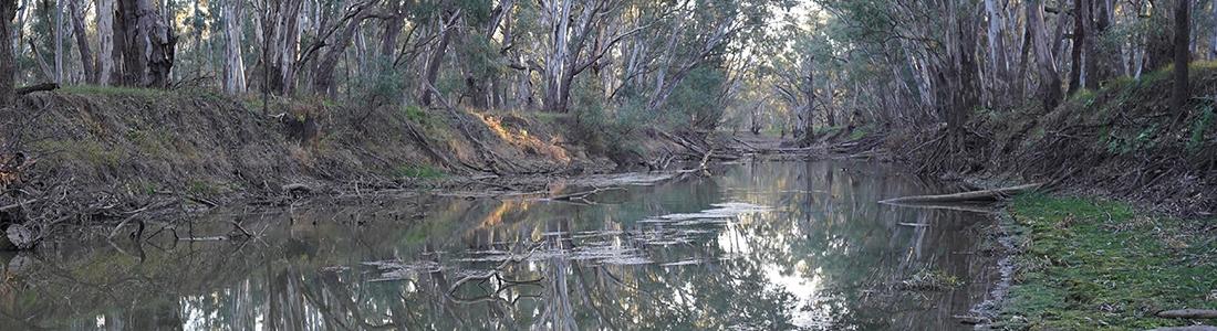 Yanco Creek cutting in NSW.