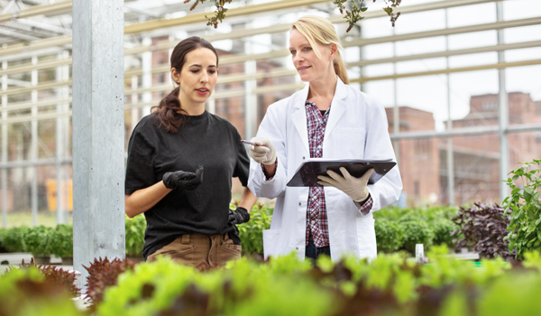 Two scientists in greenhouse assessing research