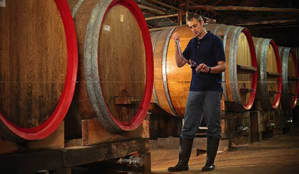 Man testing wine from barrels